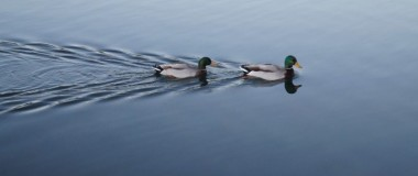 Ducks in a row EOFYs 720x479